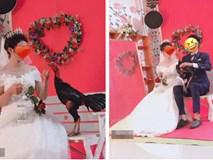 Dân mạng phì cười với cặp đôi mang gà chọi đi chụp ảnh cưới, nhưng bất ngờ nhất là kết cục do chú gà gây ra