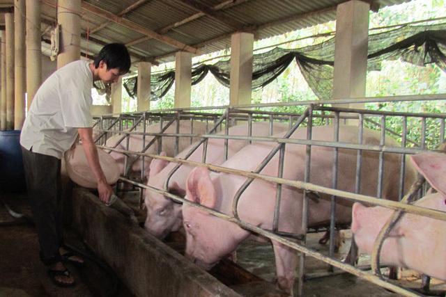 Thịt lợn bất ngờ tăng giá mạnh, thương lái săn hàng bà con không bán-2