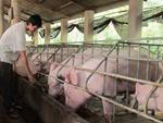 Nghi thịt lợn nhiễm sán ở trường mầm non, hiệu trưởng tin vào kết luận của bà bán thịt-4
