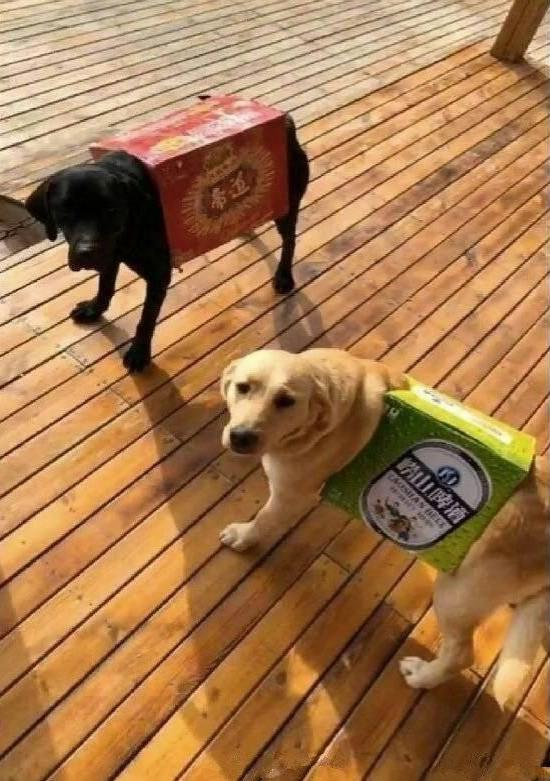 Vợ dặn đi mua quần áo cho cún cưng, anh chồng IQ vô cực khiến ai nấy cười lăn lóc khi thấy kết quả-4