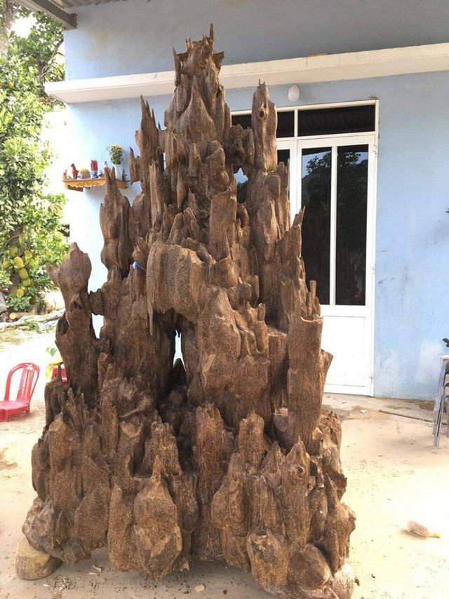 20 năm lặn lội, đại gia Hà thành ôm bộ sưu tập gỗ trầm lũa có 1 không 2-1