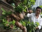 Tuyệt phẩm điêu khắc bát tiên quá hải độc nhất vô nhị ở Việt Nam-16