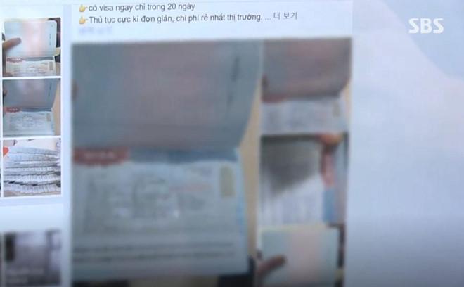 Đài SBS: Cò ở Hà Nội làm giả hồ sơ xin visa 5 năm đi Hàn Quốc-1