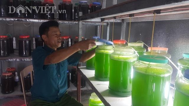 Chuyện lạ Thái Bình, chế ngàn lít nước xanh lè, rót bán hàng tỷ đồng-3