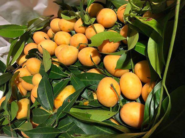 Kỳ lạ loại quả ăn vặt giá chát, chưa kịp về đã hết hàng-4