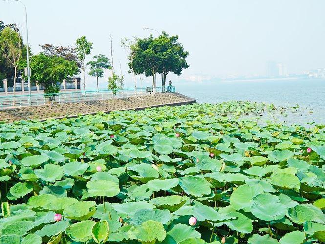 Những đầm sen tuyệt đẹp quanh Hà Nội nhất định phải check-in một lần-1