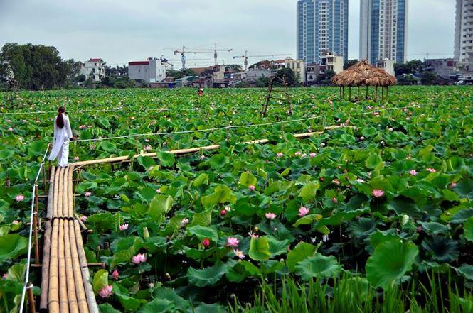 Những đầm sen tuyệt đẹp quanh Hà Nội nhất định phải check-in một lần-3