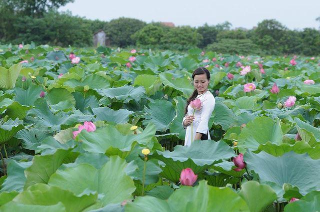 Những đầm sen tuyệt đẹp quanh Hà Nội nhất định phải check-in một lần-7