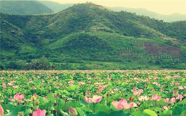 Những đầm sen tuyệt đẹp quanh Hà Nội nhất định phải check-in một lần-8