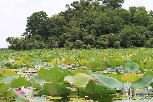 Những đầm sen tuyệt đẹp quanh Hà Nội nhất định phải check-in một lần-9