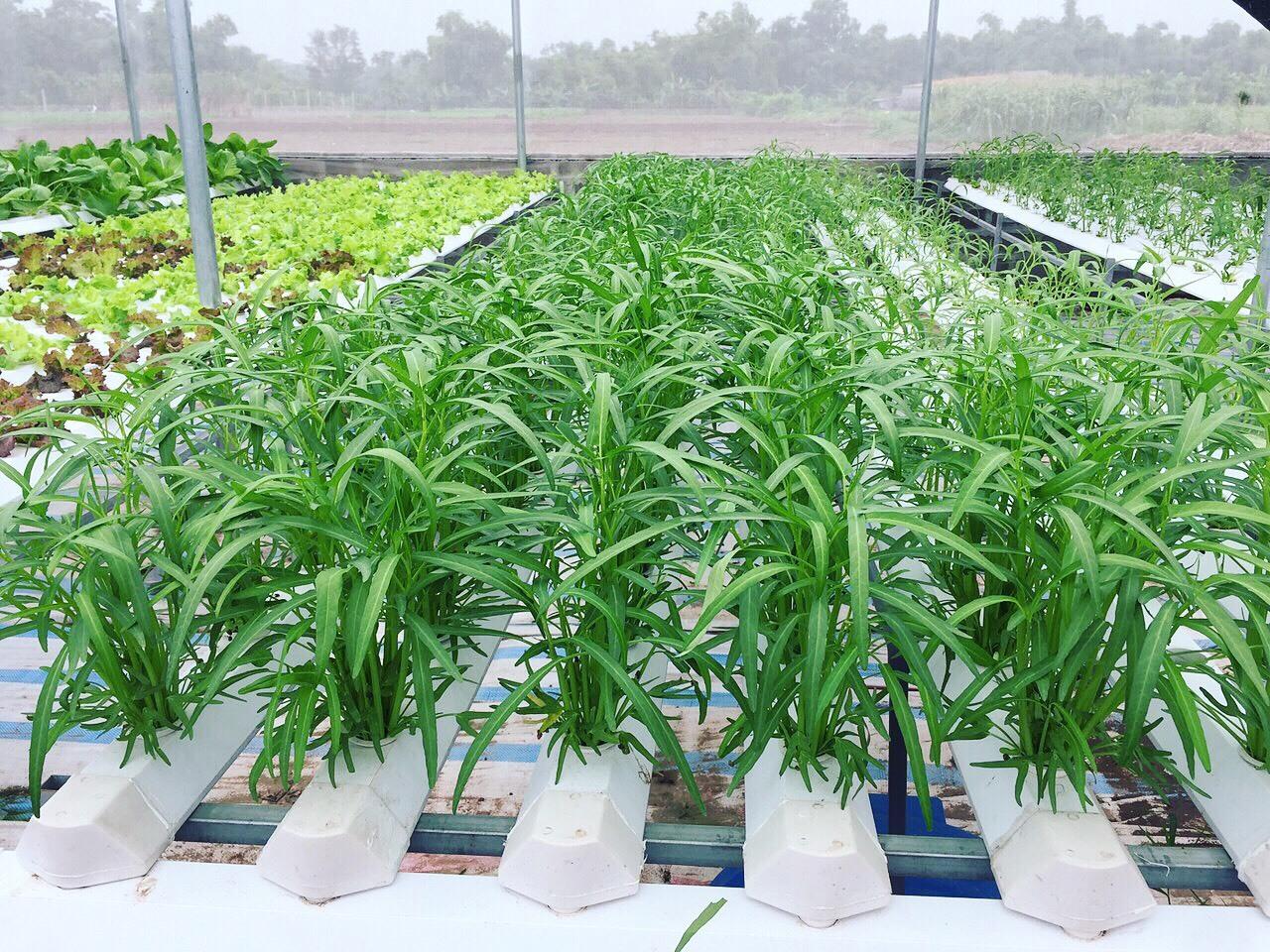 Cử nhân về quê sống nhờ 200m2 vườn, ngày ngày bán rau khắp Hà Nội-2