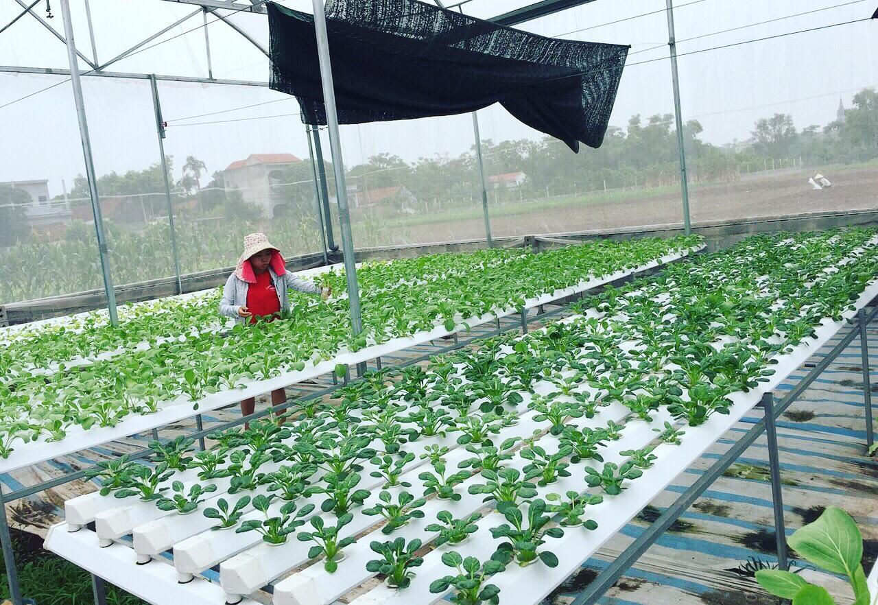 Cử nhân về quê sống nhờ 200m2 vườn, ngày ngày bán rau khắp Hà Nội-5