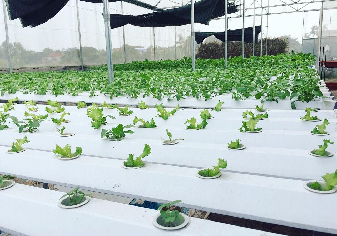 Cử nhân về quê sống nhờ 200m2 vườn, ngày ngày bán rau khắp Hà Nội-1
