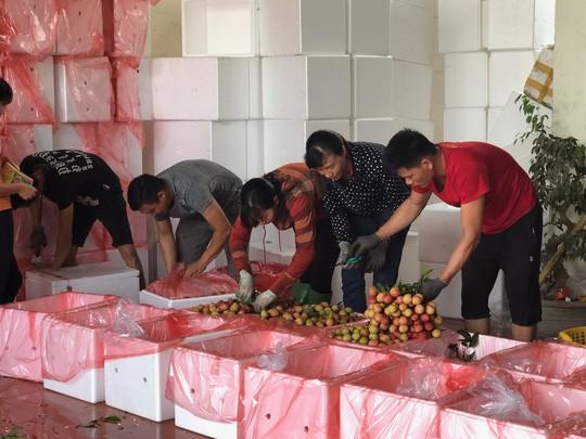 Ngay tại Bắc Giang, vải tươi loại 1 mua tại vườn đã 70.000 đồng/kg!-2
