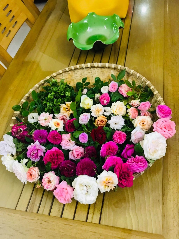 Sân thượng nhỏ chứa cả trăm gốc hồng đẹp mê hoặc của mẹ ba con ở Hà Nội-12