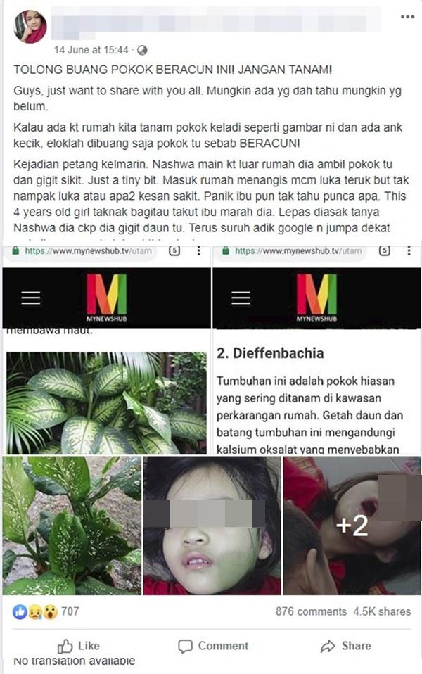 Bé gái 4 tuổi bị co giật, sưng môi, nguy hiểm tính mạng vì cắn phải lá của loại cây mà hầu như nhà nào cũng trồng trong nhà-1