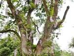 8X Lạng Sơn mê phong lan rừng: Kiếm trăm triệu từ 1 câu nhỡ mồm-6