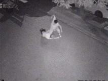 Clip: Cô gái đi chơi về khuya bỗng bị người đàn ông lạ mặt lao ra đấm đá liên tục vào đầu khiến MXH bức xúc