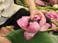 Thiên cổ đệ nhất trà sen của cụ bà U100 Hà Nội, giá 7 triệu đồng/kg