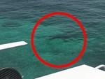 Cá mập lượn lờ tìm mồi ngay cạnh chân người tắm biển-1