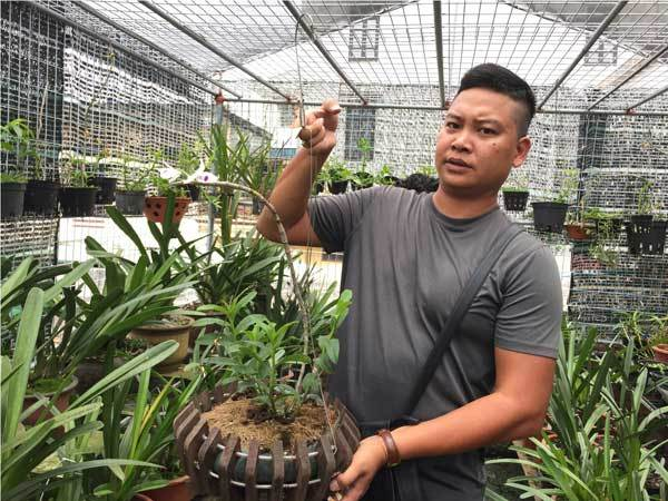Chiêm ngưỡng giò lan Người đẹp Bình Dương được trả giá cả chục tỷ-10