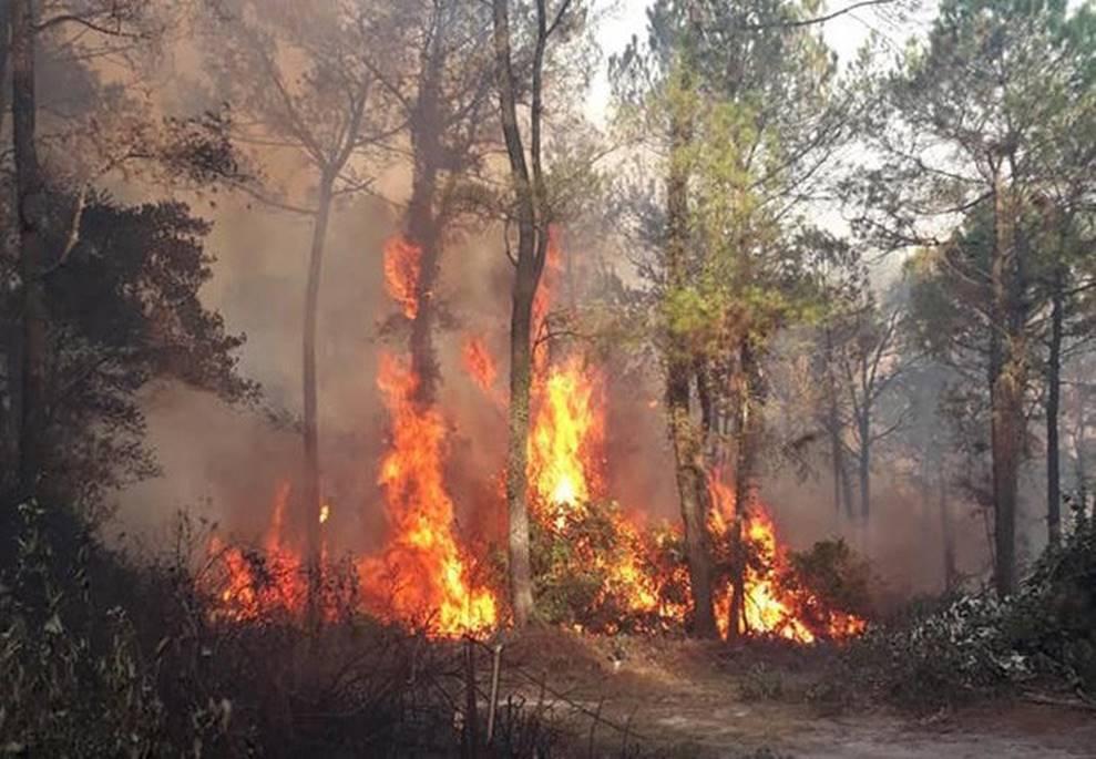 Lộ danh tính người đàn ông bị công an tạm giữ nghi gây ra vụ cháy rừng lớn nhất Hà Tĩnh-2