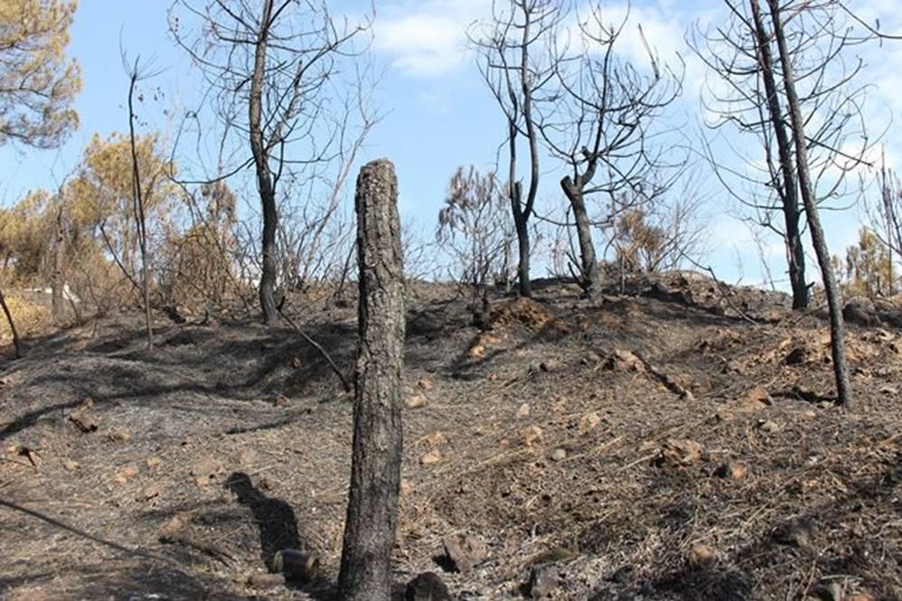 Tan hoang rừng thông Hà Tĩnh, tro than bay mịt mù sau 3 ngày hỏa hoạn-6