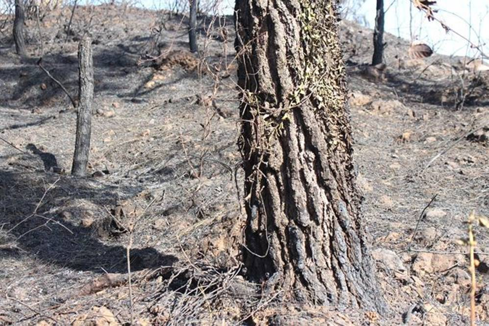 Tan hoang rừng thông Hà Tĩnh, tro than bay mịt mù sau 3 ngày hỏa hoạn-9