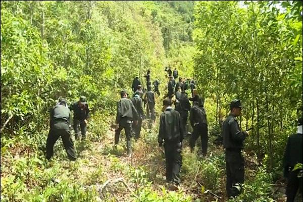 Quảng Bình lại xảy ra cháy rừng, 500 người nỗ lực vẫn chưa khống chế được lửa-2