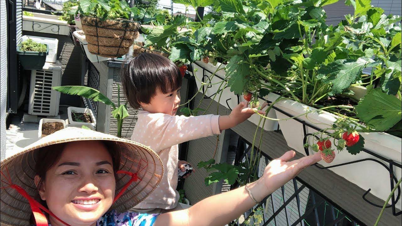 Thời của những bà nội trợ 4.0, xem nấu ăn, làm vườn, chăm con không còn là trách nhiệm, mà thành thú vui có thể hái ra tiền-8