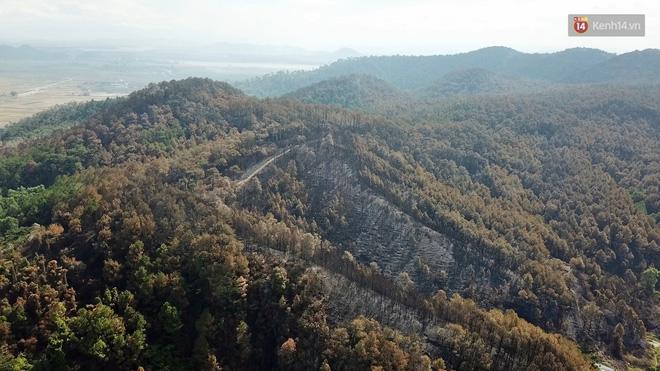 Clip nhìn từ trên cao: Cánh rừng thông xám xịt ở Hà Tĩnh sau 4 ngày lửa bùng cháy kinh hoàng khiến nhiều người xót xa-2