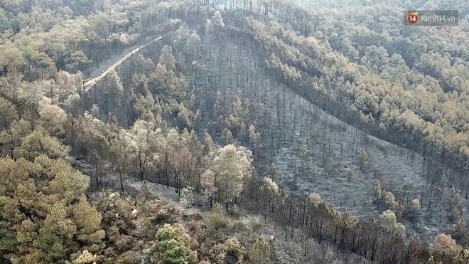 Clip nhìn từ trên cao: Cánh rừng thông xám xịt ở Hà Tĩnh sau 4 ngày lửa bùng cháy kinh hoàng khiến nhiều người xót xa-3