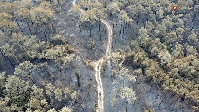 Clip nhìn từ trên cao: Cánh rừng thông xám xịt ở Hà Tĩnh sau 4 ngày lửa bùng cháy kinh hoàng khiến nhiều người xót xa-4