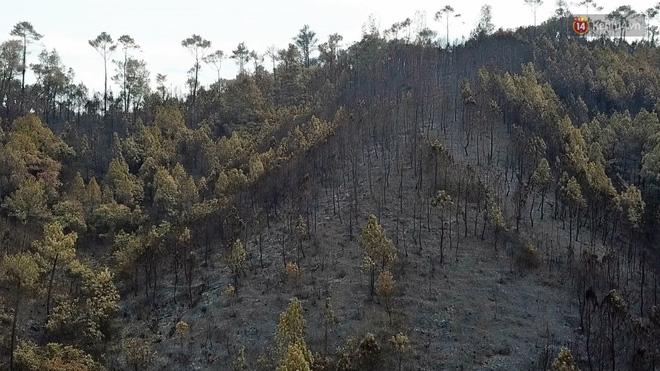 Clip nhìn từ trên cao: Cánh rừng thông xám xịt ở Hà Tĩnh sau 4 ngày lửa bùng cháy kinh hoàng khiến nhiều người xót xa-1