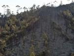 Lửa tiếp tục cháy trên núi Mồng Gà-3