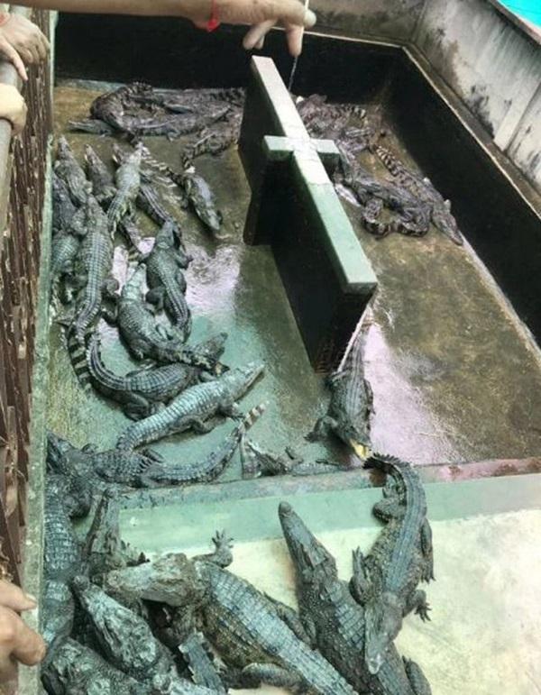 Mẹ mải trông con sơ sinh, vài tiếng sau ám ảnh cả đời khi nhìn vào chuồng cá sấu-2