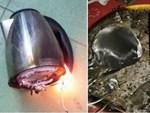 Những sai lầm sử dụng máy giặt gây tốn điện, hỏng quần áo-5