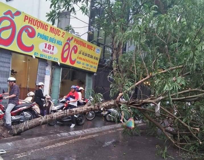 Ảnh hưởng của bão số 2, mưa giông ngã cây đè 1 người bị thương ở Hà Nội-1