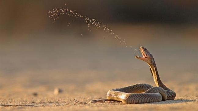 Nếu con vật này vào nhà chứng tỏ Thần Tài ghé thăm: Bạn đừng xua đuổi đánh đập mà mất lộc-2