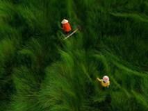 Việt Nam tuyệt đẹp trong clip hướng dẫn khách Tây du lịch một mình