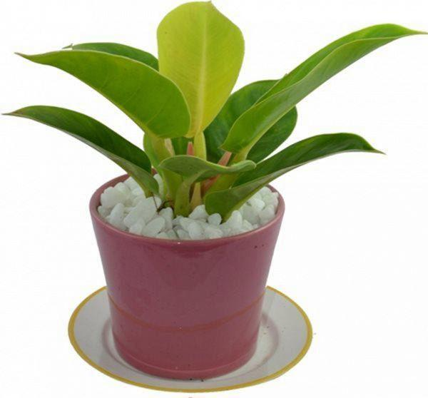 4 loại cây đặt lên bàn thờ sự nghiệp hanh thông, vượng khí tăng lên 10 lần-3
