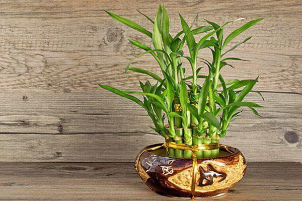 4 loại cây đặt lên bàn thờ sự nghiệp hanh thông, vượng khí tăng lên 10 lần-4