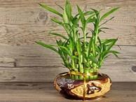 4 loại cây đặt lên bàn thờ sự nghiệp hanh thông, vượng khí tăng lên 10 lần