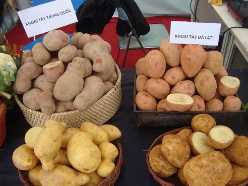 Khoai tây vẫn là khoai tây, làm sao phân biệt hàng Tàu hay Việt-1