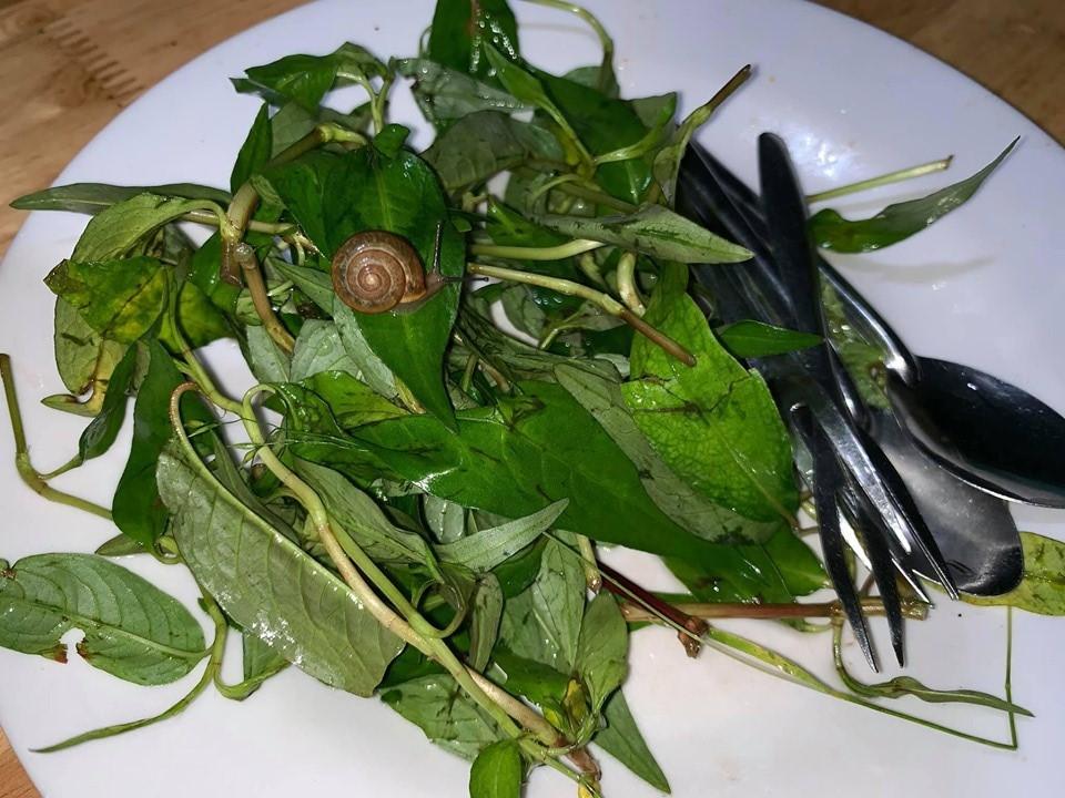 Quán ốc nổi tiếng nhất nhì Đà Lạt bị tố không vệ sinh, làm khách đau bụng, đĩa rau có sinh vật lạ còn gây sốc hơn-4