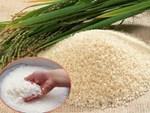 Lén vùi nắm muối vào thùng gạo, người vợ trẻ sững sờ khi thấy điều bất ngờ chưa từng có-2