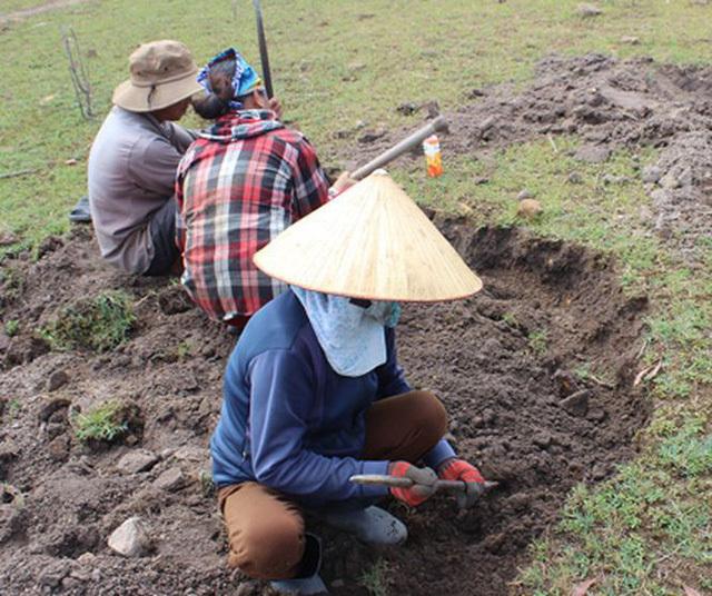 Đi rừng nhặt được viên đá quý 5 tỷ, vạn người đào núi tìm vận may-3