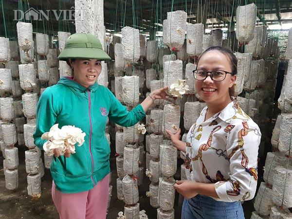 Bất chấp nắng nóng, dân trồng nấm bào ngư vẫn lời tiền triệu/ngày-1