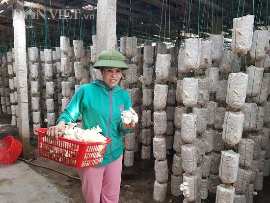 Bất chấp nắng nóng, dân trồng nấm bào ngư vẫn lời tiền triệu/ngày-3
