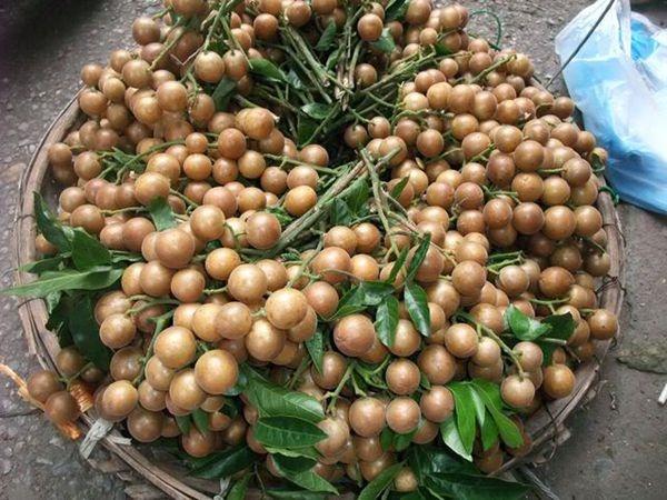 Quất hồng bì: Ở Việt Nam chỉ là quả dại, sang TQ hóa trái cây vàng-1
